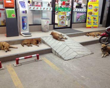 Bangkok Thailand Soi Dog