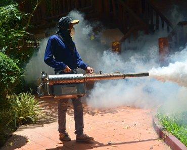 Mosquito Bites In Thailand Cause Malaria And Dengue Fever