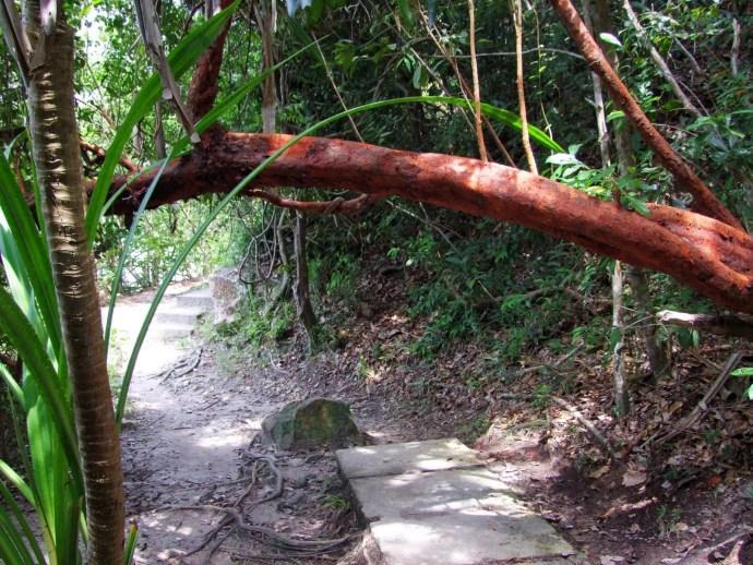 chemin forêt parc national penang malaisie