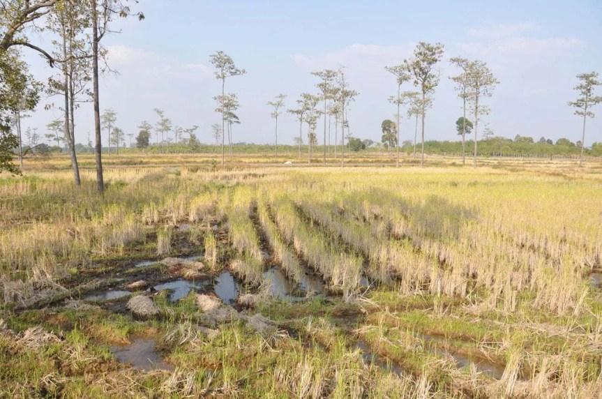 Paysage vers Phu Chong Na Yoi National Park-Ubon Ratchathani