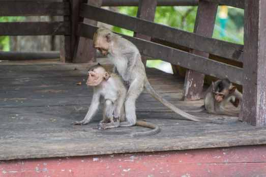 singes phetchaburi palais phra nakhon khiri khao wang