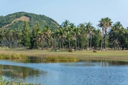 parc national sam roi yot - thailande