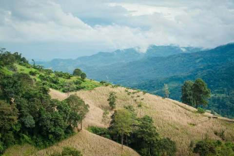 paysage doi mae salong - thailande