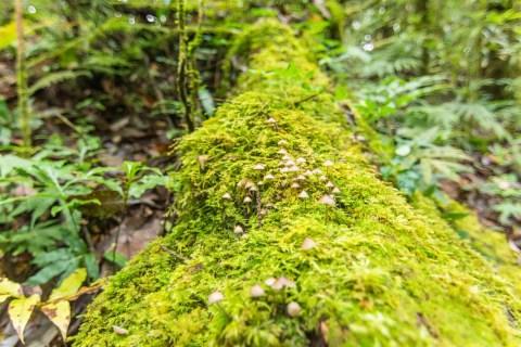 champignons sur un tronc au doi inthanon - chiang mai