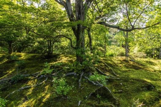 jardin sogenchi tenryu-ji kyoto - japon