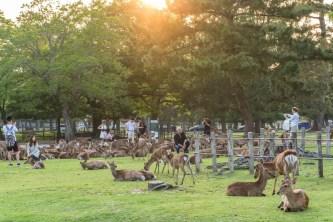parc cerfs nara japon