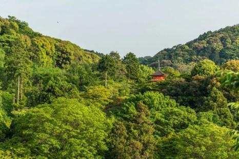 kiyomizu dera - kyoto