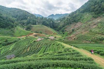 paysage plantation the - doi ang khang