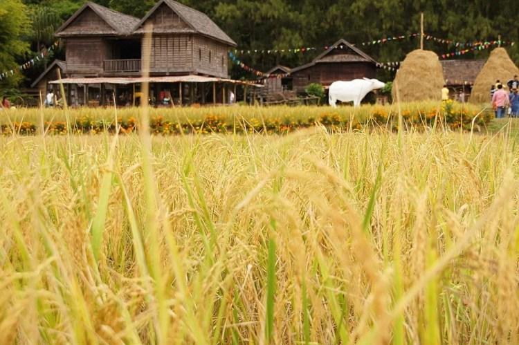 jim thompson farm khao yai