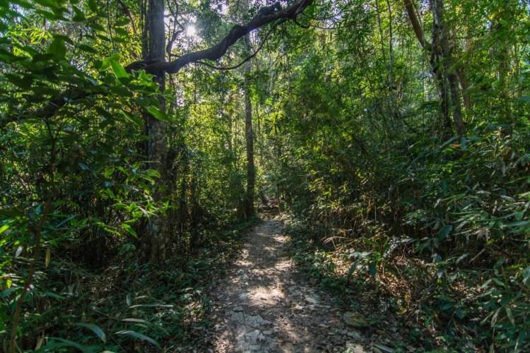 sentier pha kluai mai waterfall parc national khao yai - thailande