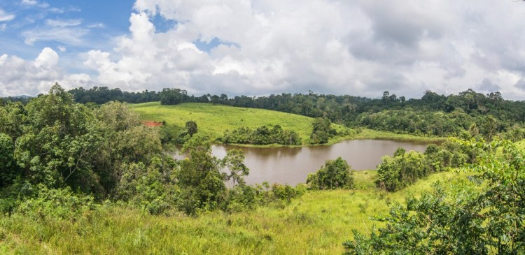 vue tour nong phak chi - parc national khao yai - thailande