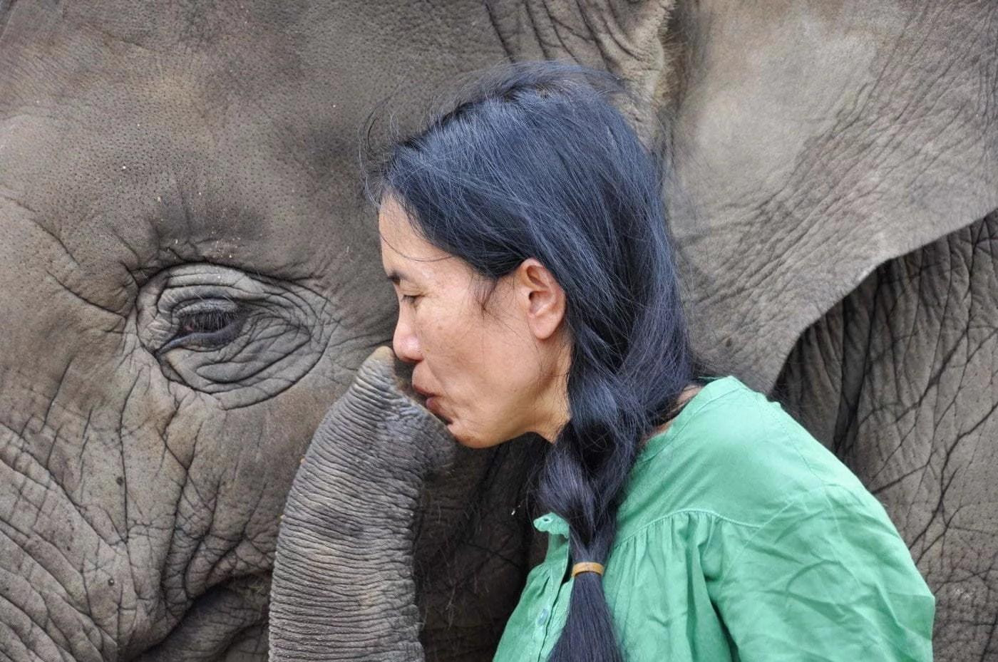 cover elephant nature park - chiang mai province - thailande
