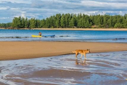 chien plage koh phra thong - thailande