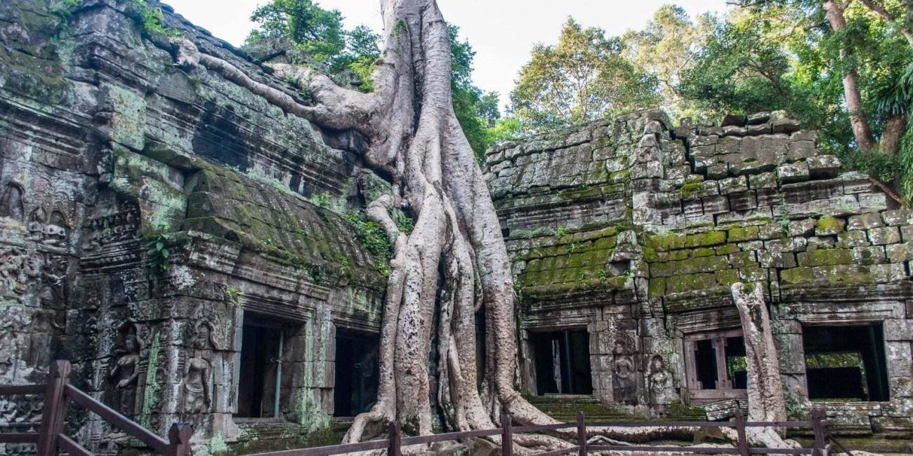 racine empetree temple ta prohm - cambodge