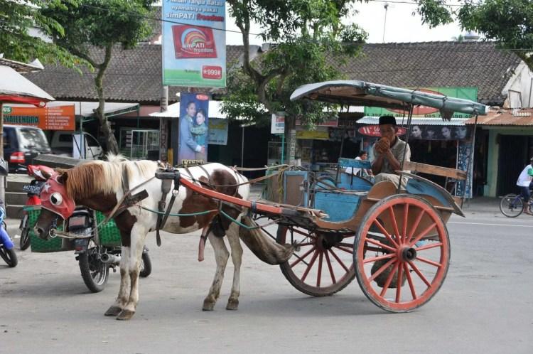 caleche a borobudur indonesie