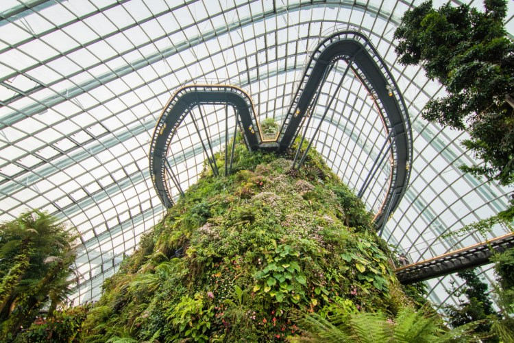 interieur cloud forest dome singapour