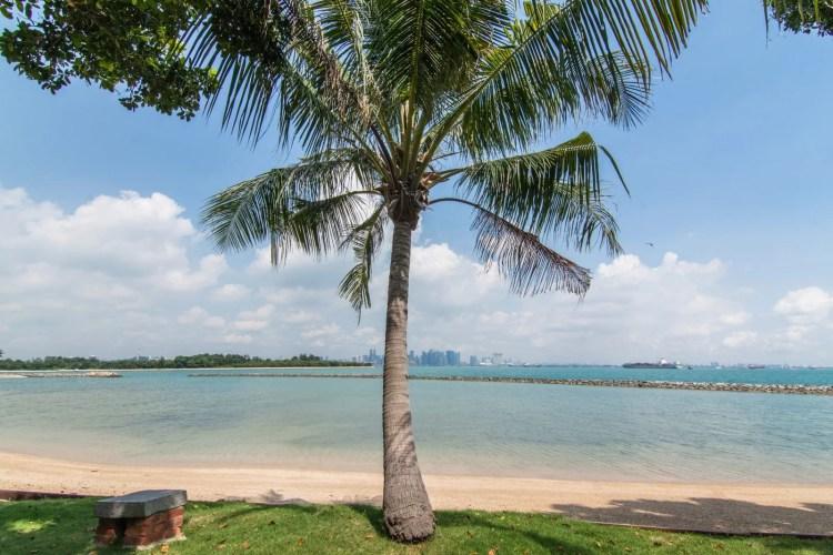 palmier kusu island singapour