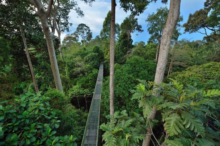 rainforest-discovery-centre-sepilok-sabah-malaisie