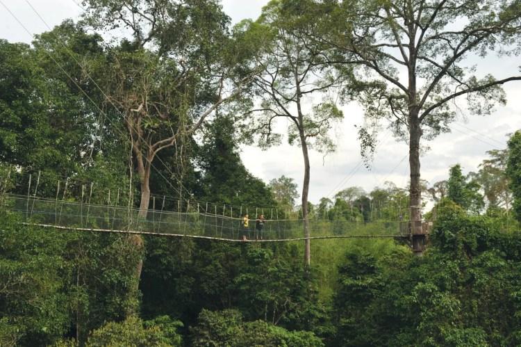 taman-negara-kuala-koh-malaisie