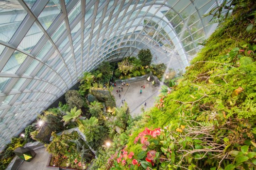 vue plongee cloud forest dome singapour
