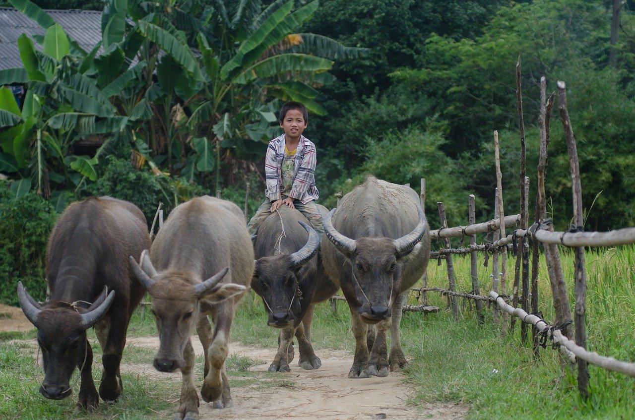 Lumpy skin disease outbreak in cattle in Nakhon Phanom