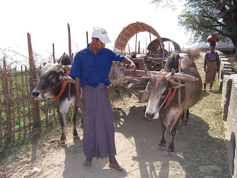 """Myanmar man in traditional Burmese male wear called """"longyi"""""""