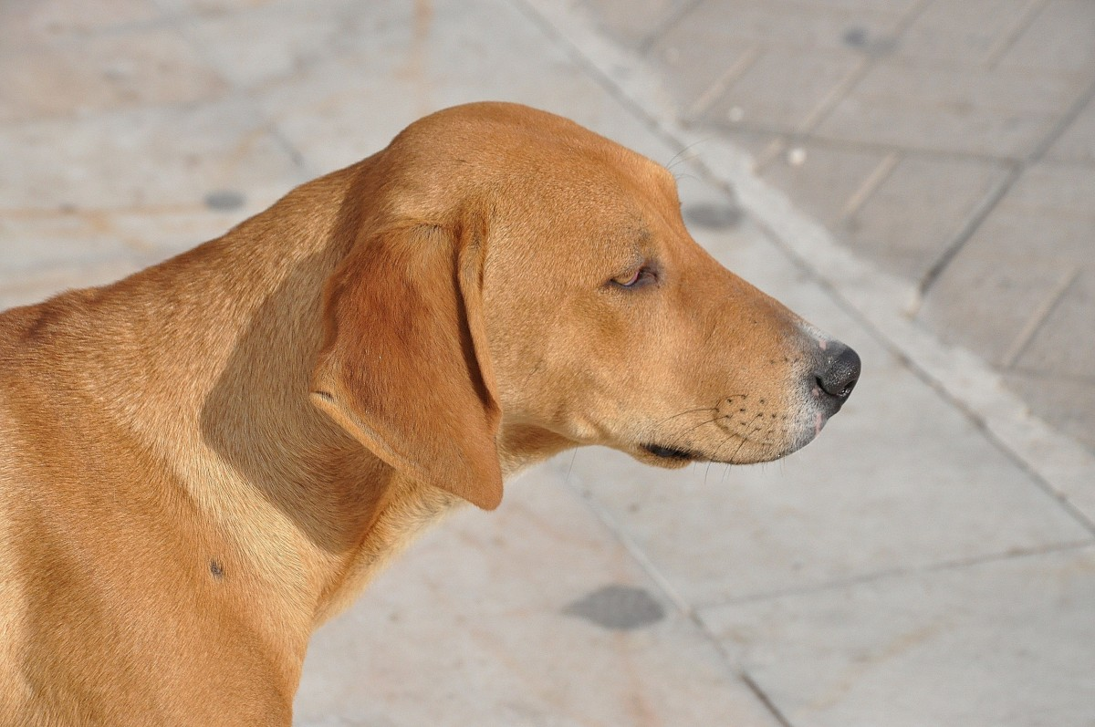 Sniffer dogs help to detect COVID-19 in Thailand
