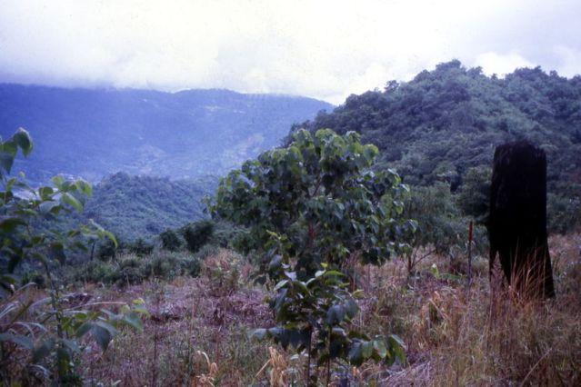 Chiang Mai's mercury drops to 5 C Tuesday morning
