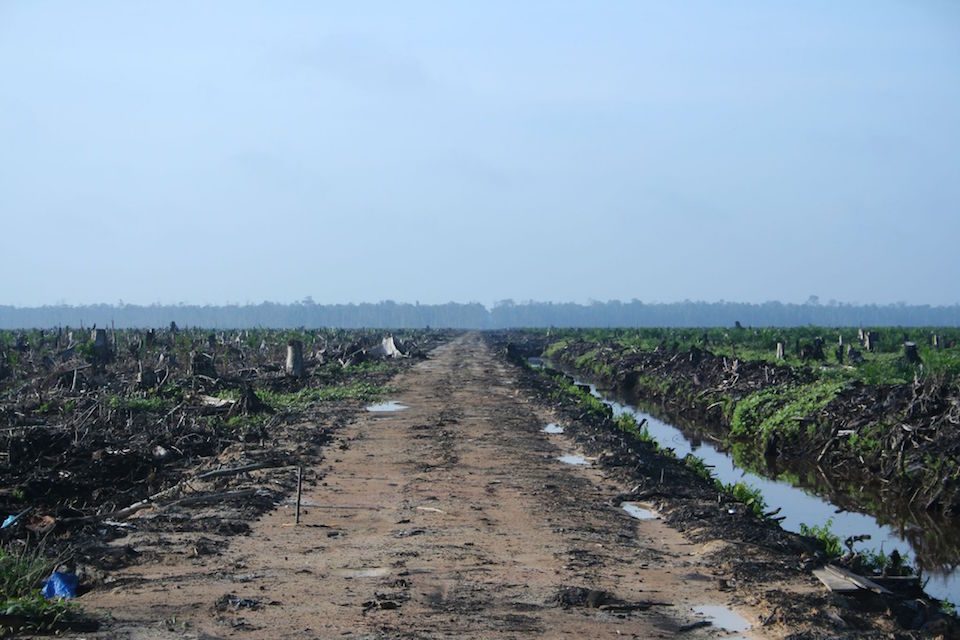 Palm oil plantation in Indonesia