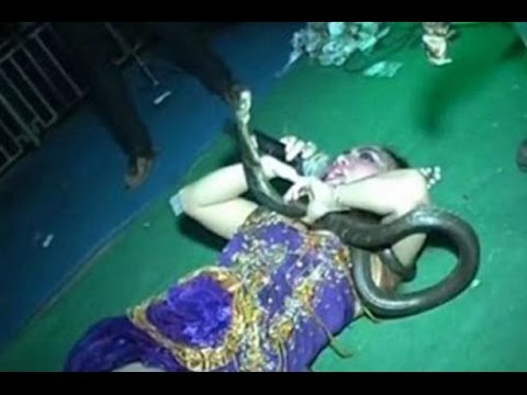 Indonesian Singer Performs for 45 Minutes after King Cobra Bite, Dies on Stage