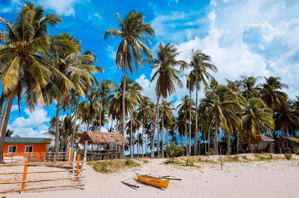 Philippine island beach with palm trees