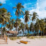 Philippine island beach with palm trees
