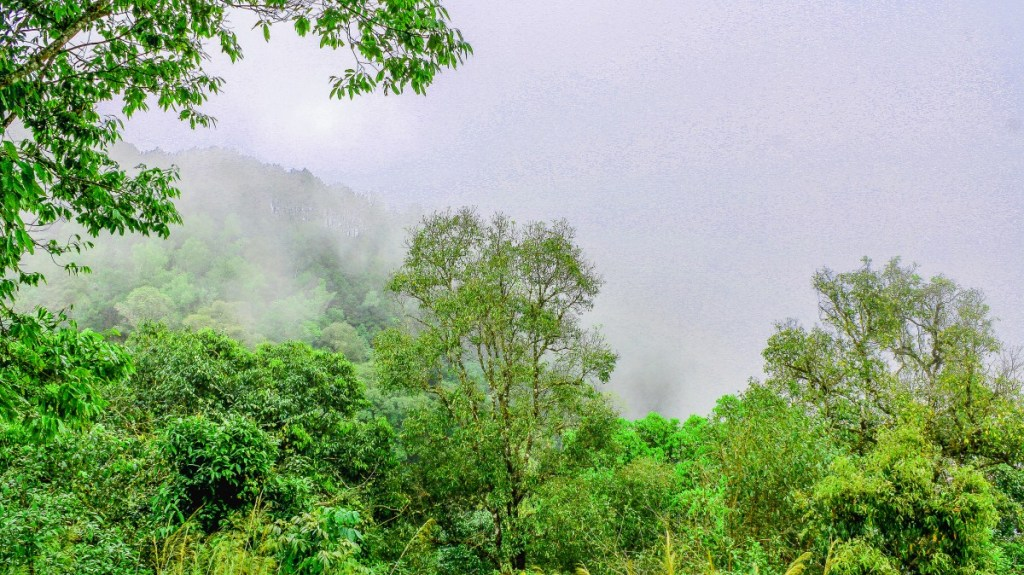 Smoke haze on a forest in Thailand