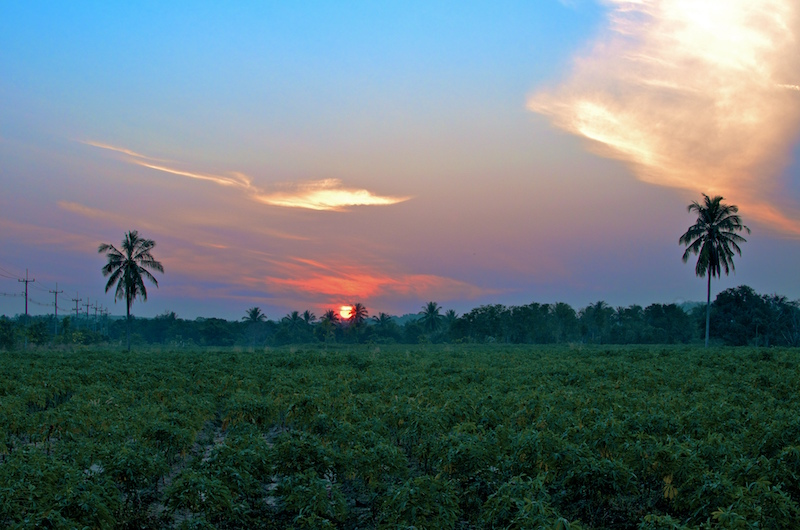Sunrise over the Tapioca fields in Eastern Thailand