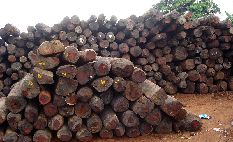 Illegally logged Rosewood