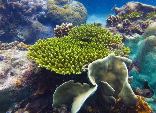 Underwater photographs of plants and animals from diving sites around Koh Tao