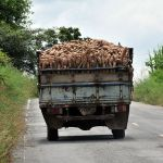 A truck laden with cassava roots in Thailand
