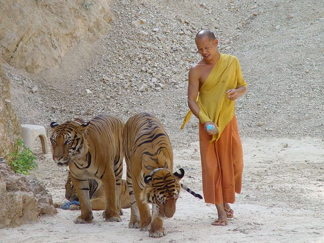 Abbot Remains Free as Tiger Temple Threatens to Sue Gov't