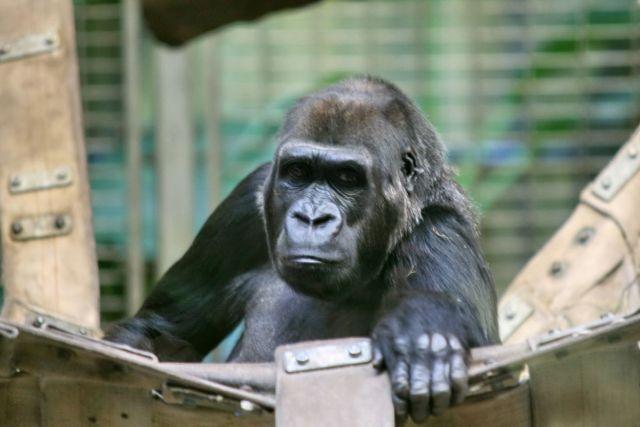 Thailand protests Gambian 'slander' of tourism