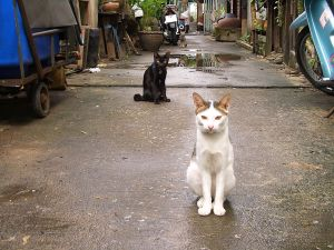 Cats on a street in Bangkok