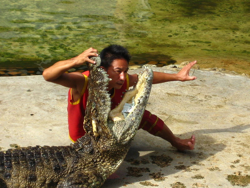 Crocodile show at Sriracha Tiger Zoo in Chonburi