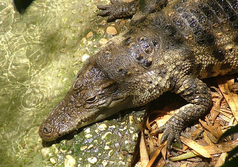 Possible crocodile sightings closes Phuket beaches