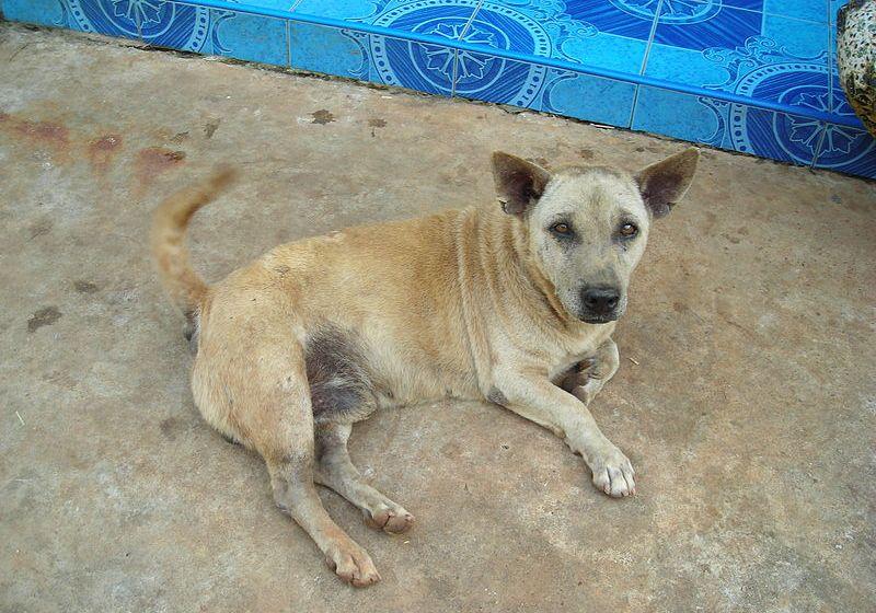 Police close dog meat shop in Sakon Nakhon