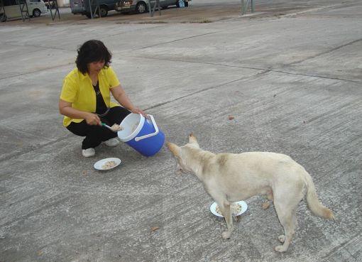 Thai girl feeding a dog