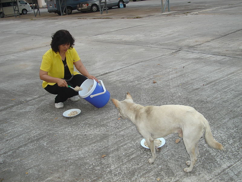 Thai girl feeding a dog