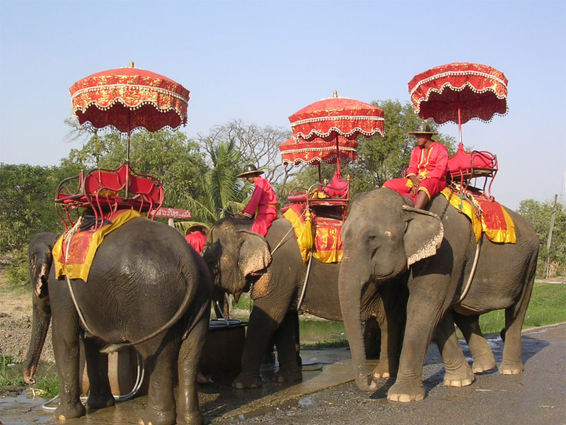 Ayutthaya Elephant Camp