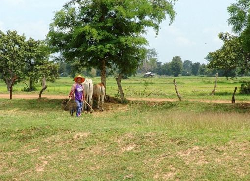 Isan Farmer and rice fields