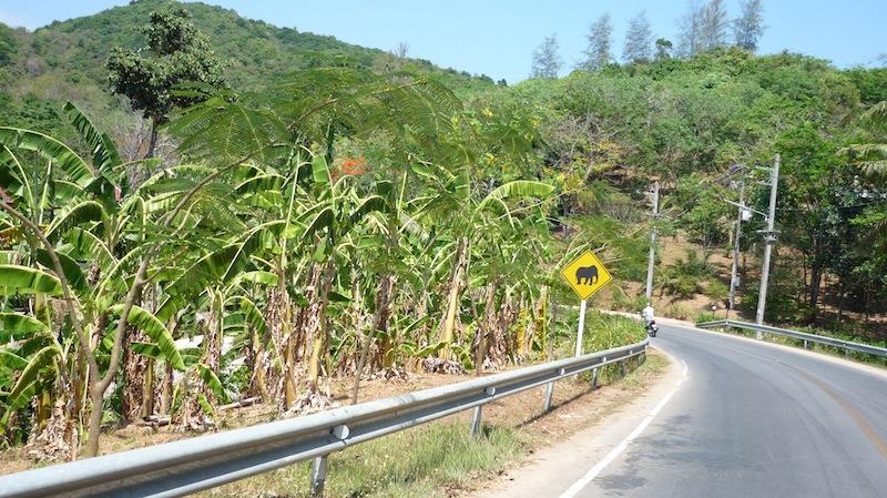 Tour bus brakes fail on Patong Hill