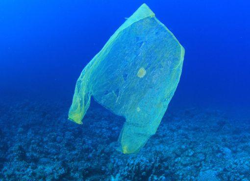 Plastic bag in the sea