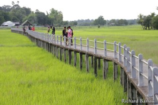 Rice Field Bridge